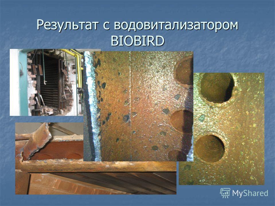 Результат с водовитализатором BIOBIRD