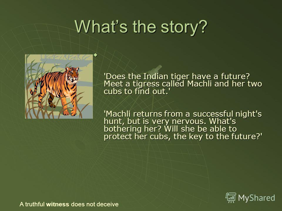 Whats the story? 'Does the Indian tiger have a future? Meet a tigress called Machli and her two cubs to find out.' 'Machli returns from a successful night's hunt, but is very nervous. What's bothering her? Will she be able to protect her cubs, the ke