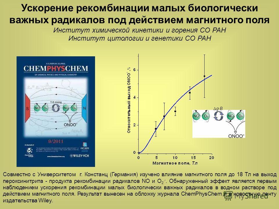 Δg·BΔg·B Совместно с Университетом г. Констанц (Германия) изучено влияние магнитного поля до 18 Тл на выход пероксинитрита - продукта рекомбинации радикалов NO и O 2.-. Обнаруженный эффект является первым наблюдением ускорения рекомбинации малых биол
