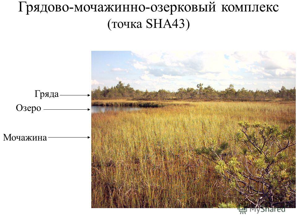 Грядово-мочажина-озерковый комплекс (точка SHA43) Гряда Озеро Мочажина