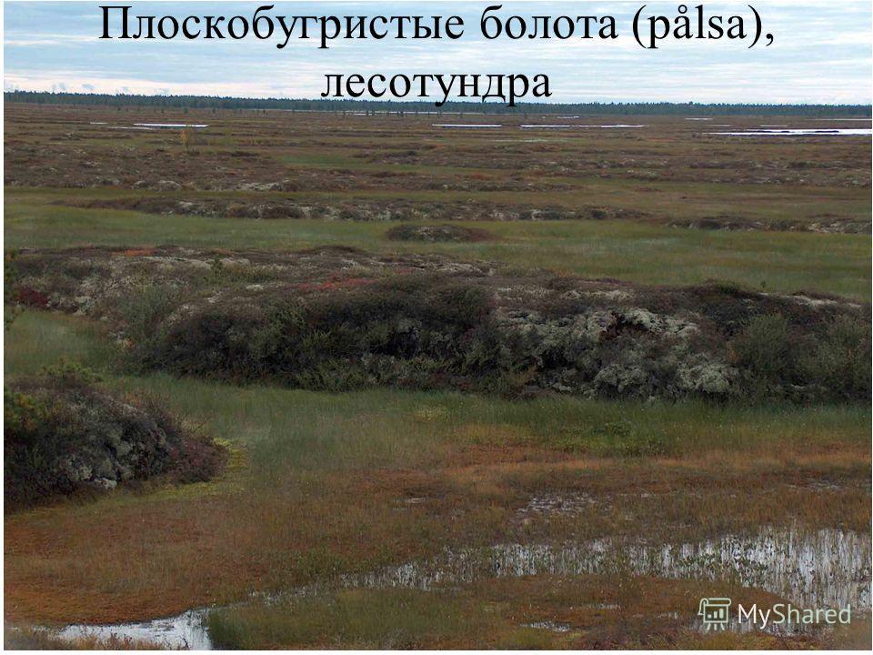 Плоскобугристые болота (pålsa), лесотундра