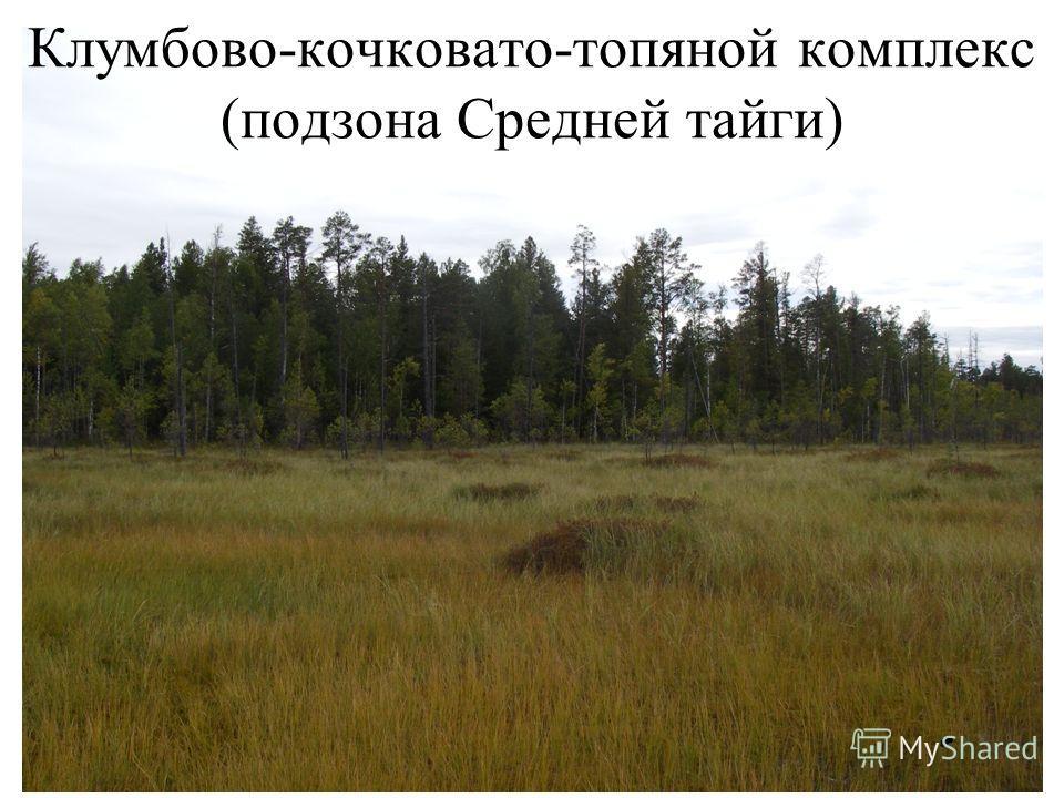 Клумбово-кочковато-топяной комплекс (подзона Средней тайги)