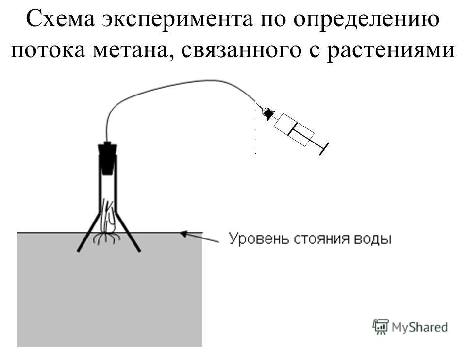 Схема эксперимента по определению потока метана, связанного с растениями