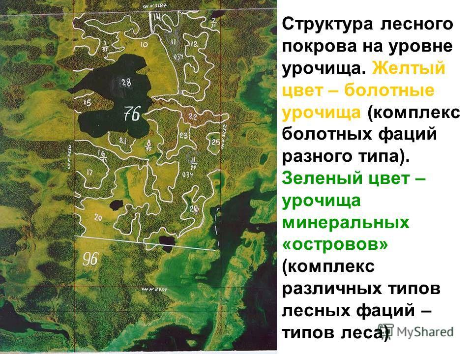 Структура лесного покрова на уровне урочища. Желтый цвет – болотные урочища (комплекс болотных фаций разного типа). Зеленый цвет – урочища минеральных «островов» (комплекс различных типов лесных фаций – типов леса)