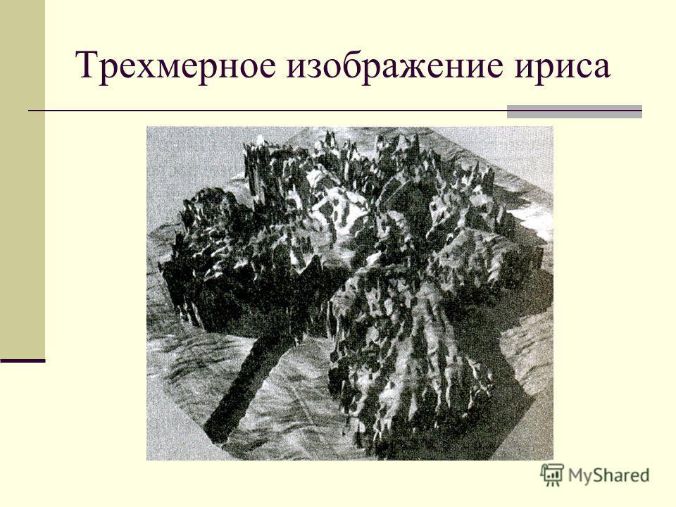 Трехмерное изображение ириса