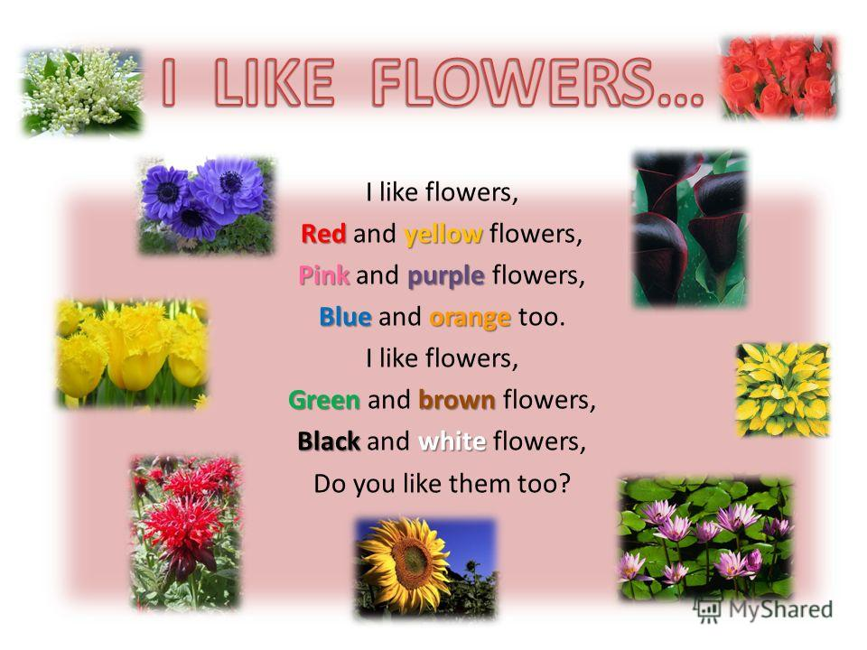 I like flowers, Redyellow Red and yellow flowers, Pinkpurple Pink and purple flowers, Blueorange Blue and orange too. I like flowers, Greenbrown Green and brown flowers, Blackwhite Black and white flowers, Do you like them too?