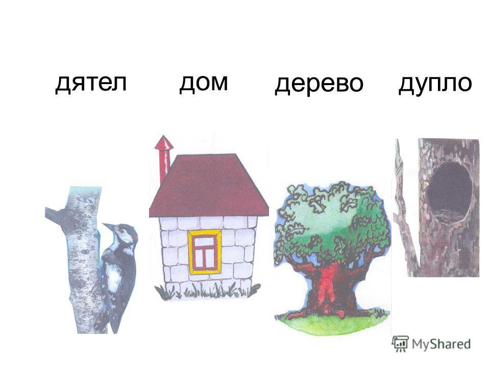 дятел дом дерево дупло