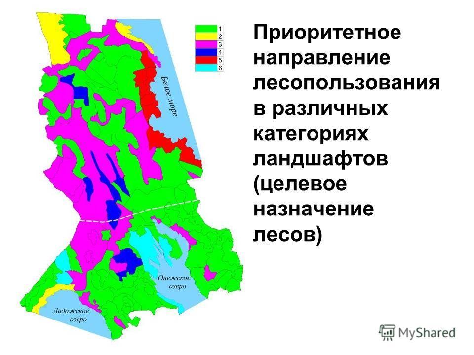 Приоритетное направление лесопользования в различных категориях ландшафтов (целевое назначение лесов)