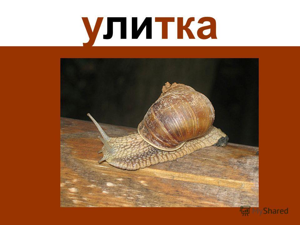 улитка