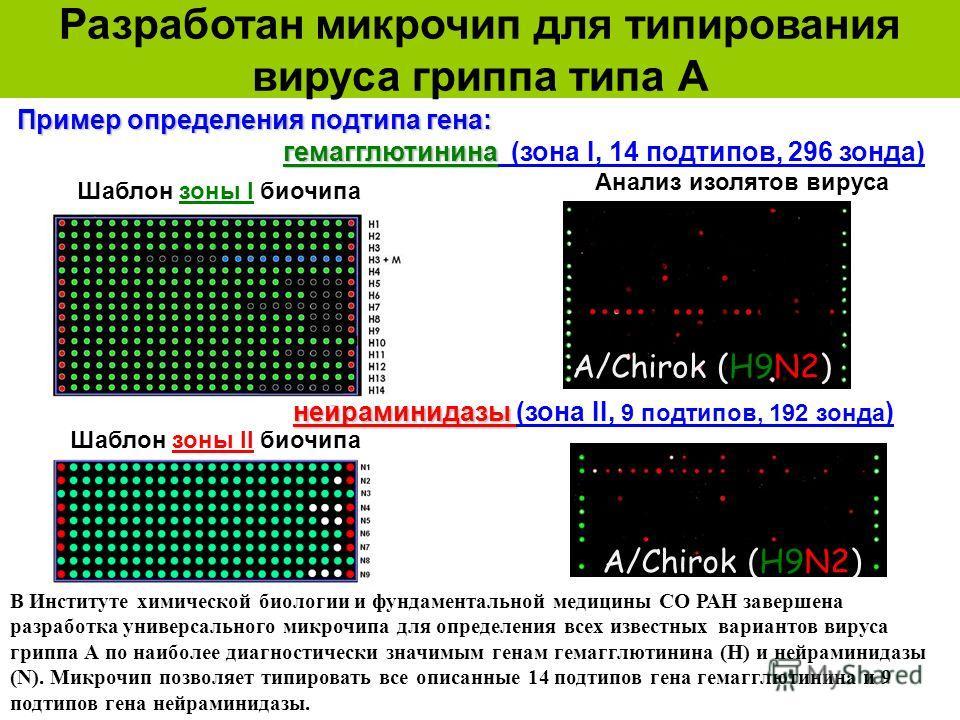 Разработан микрочип для типирования вируса гриппа типа А Шаблон зоны I биочипа Пример определения подтипа гена: гемагглютинина гемагглютинина (зона I, 14 подтипов, 296 зонда) нейраминидазы нейраминидазы (зона II, 9 подтипов, 192 зонда ) A/Chirok (H9N