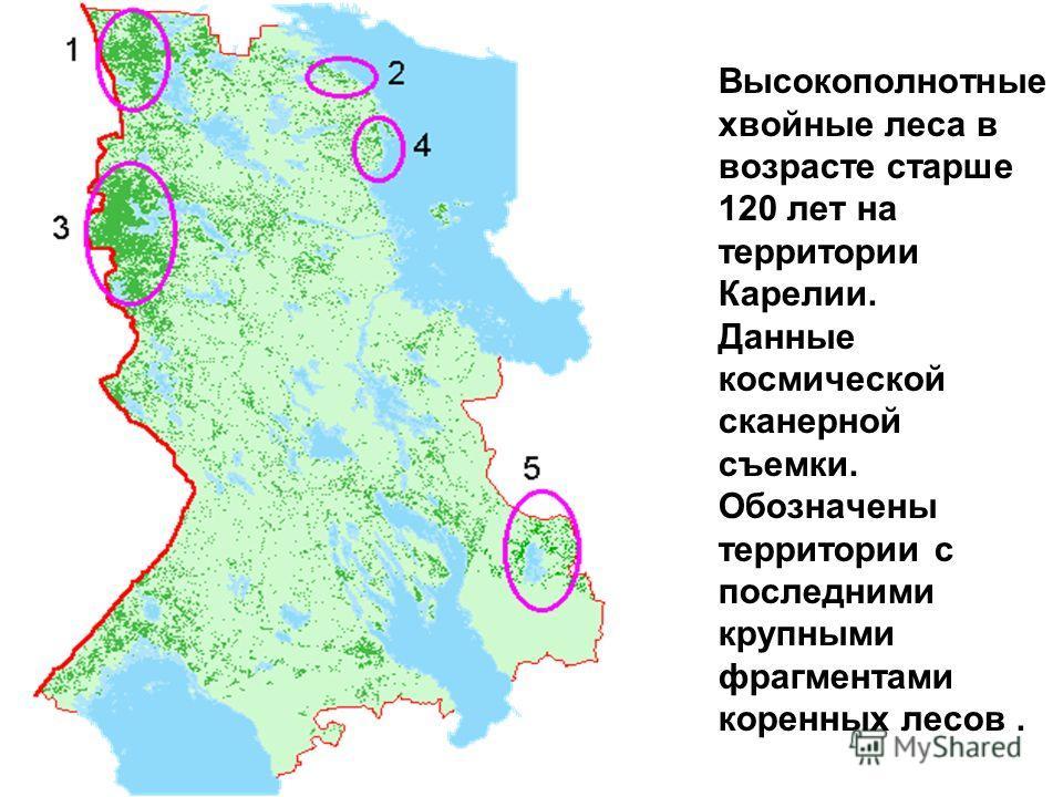 Высокополнотные хвойные леса в возрасте старше 120 лет на территории Карелии. Данные космической сканерной съемки. Обозначены территории с последними крупными фрагментами коренных лесов.