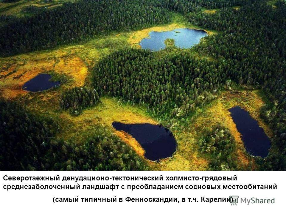 Северотаежный денудационо-тектонический холмисто-грядовый среднезаболоченный ландшафт с преобладанием сосновых местообитаний (самый типичный в Фенноскандии, в т.ч. Карелии)