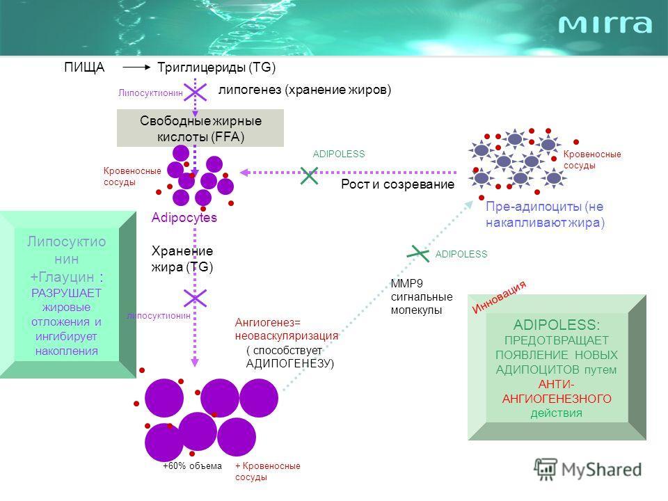 ПИЩАТриглицериды (TG) Свободные жирные кислоты (FFA) Пре-адипоциты (не накапливают жира) Adipocytes +60% объема ADIPOLESS: ПРЕДОТВРАЩАЕТ ПОЯВЛЕНИЕ НОВЫХ АДИПОЦИТОВ путем АНТИ- АНГИОГЕНЕЗНОГО действия Липосуктио нин +Глауцин : РАЗРУШАЕТ жировые отложе