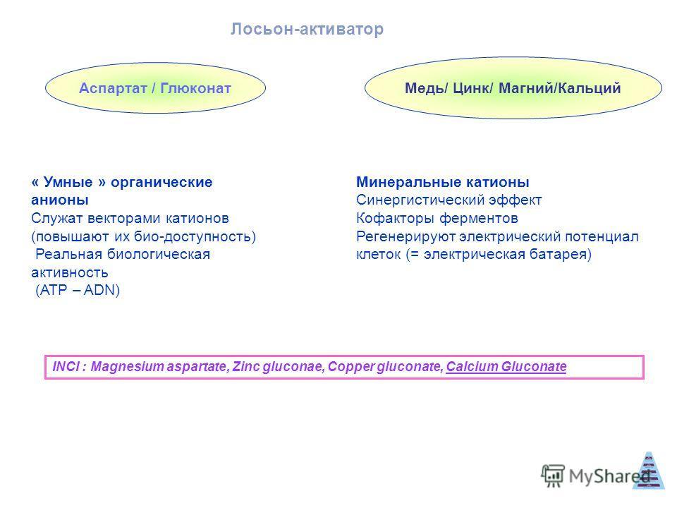 Аспартат / Глюконат Медь/ Цинк/ Магний/Кальций « Умные » органические анионы Служат векторами катионов (повышают их био-доступность) Реальная биологическая активность (ATP – ADN) Минеральные катионы Синергистический эффект Кофакторы ферментов Регенер