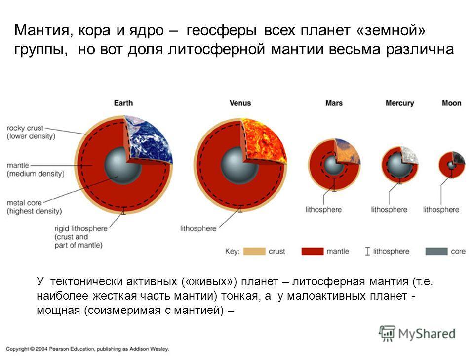 Мантия, кора и ядро – геосферы всех планет «земной» группы, но вот доля литосферной мантии весьма различна У тектонически активных («живых») планет – литосферная мантия (т.е. наиболее жесткая часть мантии) тонкая, а у малоактивных планет - мощная (со