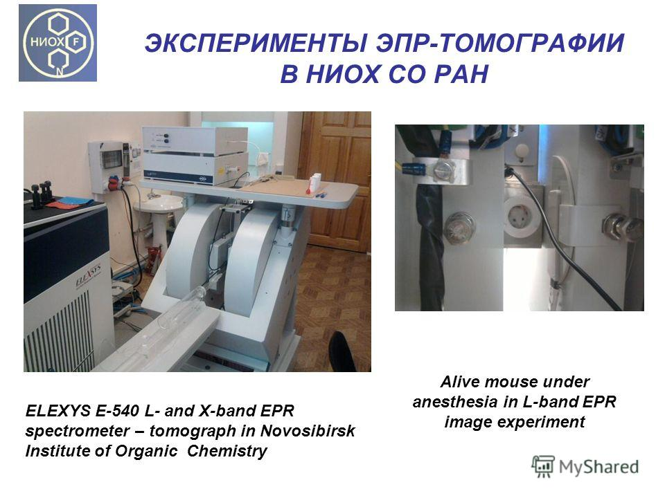 ЭКСПЕРИМЕНТЫ ЭПР-ТОМОГРАФИИ В НИОХ СО РАН ELEXYS E-540 L- and X-band EPR spectrometer – tomograph in Novosibirsk Institute of Organic Chemistry Alive mouse under anesthesia in L-band EPR image experiment