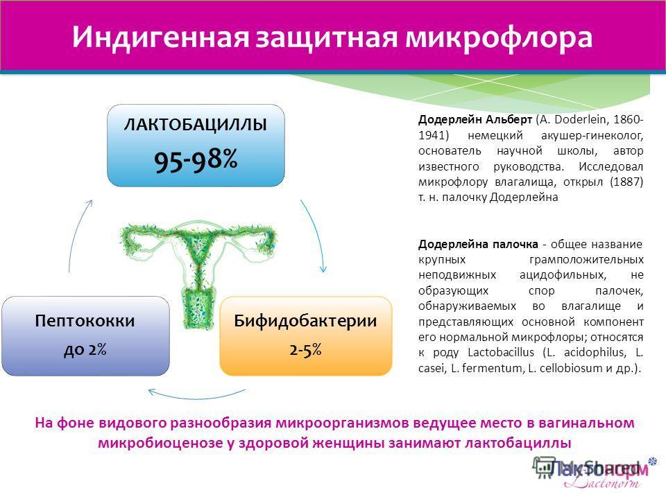 ЛАКТОБАЦИЛЛЫ 95-98% Бифидобактерии 2-5% Пептококки до 2% Индигенная защитная микрофлора На фоне видового разнообразия микроорганизмов ведущее место в вагинальном микробиоценозе у здоровой женщины занимают лактобациллы Додерлейн Альберт (A. Doderlein,