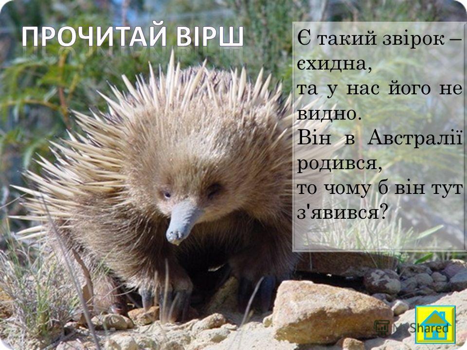 Є такий звірок – єхидна, та у нас його не видно. Він в Австралії родился, то чему б він тут з ' явився?