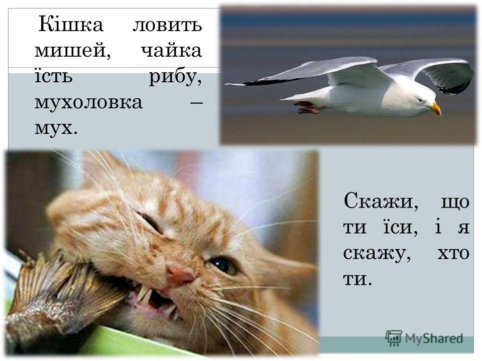 Кішка ловить мишей, чайка їсть рыбу, мухоловка – мух. Скажи, що ты їси, і я скажу, кто ты.