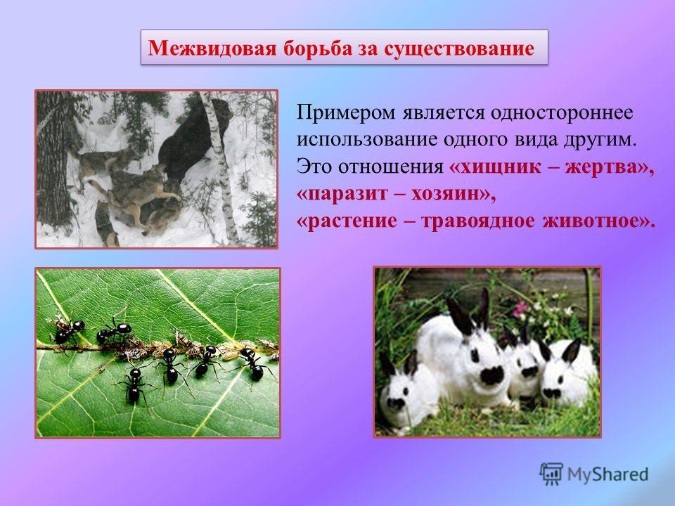 Межвидовая борьба за существование Примером является одностороннее использование одного вида другим. Это отношения «хищник – жертва», «паразит – хозяин», «растение – травоядное животное».