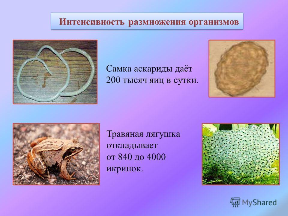 Самка аскариды даёт 200 тысяч яиц в сутки. Интенсивность размножения организмов Травяная лягушка откладывает от 840 до 4000 икринок.