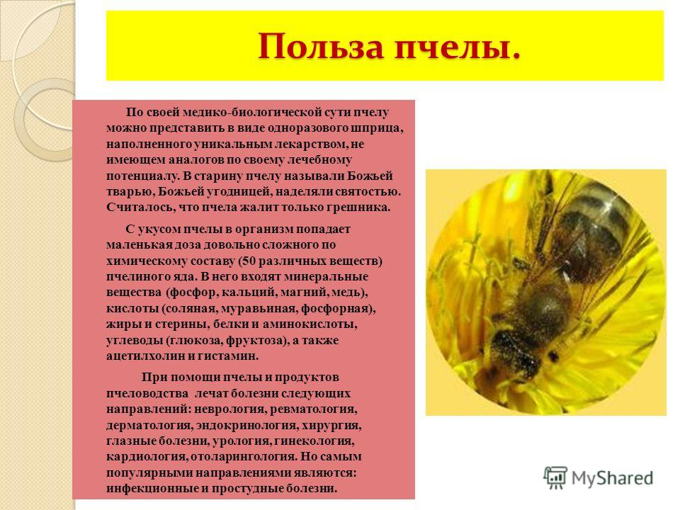 Польза пчелы. Польза пчелы. По своей медико-биологической сути пчелу можно представить в виде одноразового шприца, наполненного уникальным лекарством, не имеющем аналогов по своему лечебному потенциалу. В старину пчелу называли Божьей тварью, Божьей