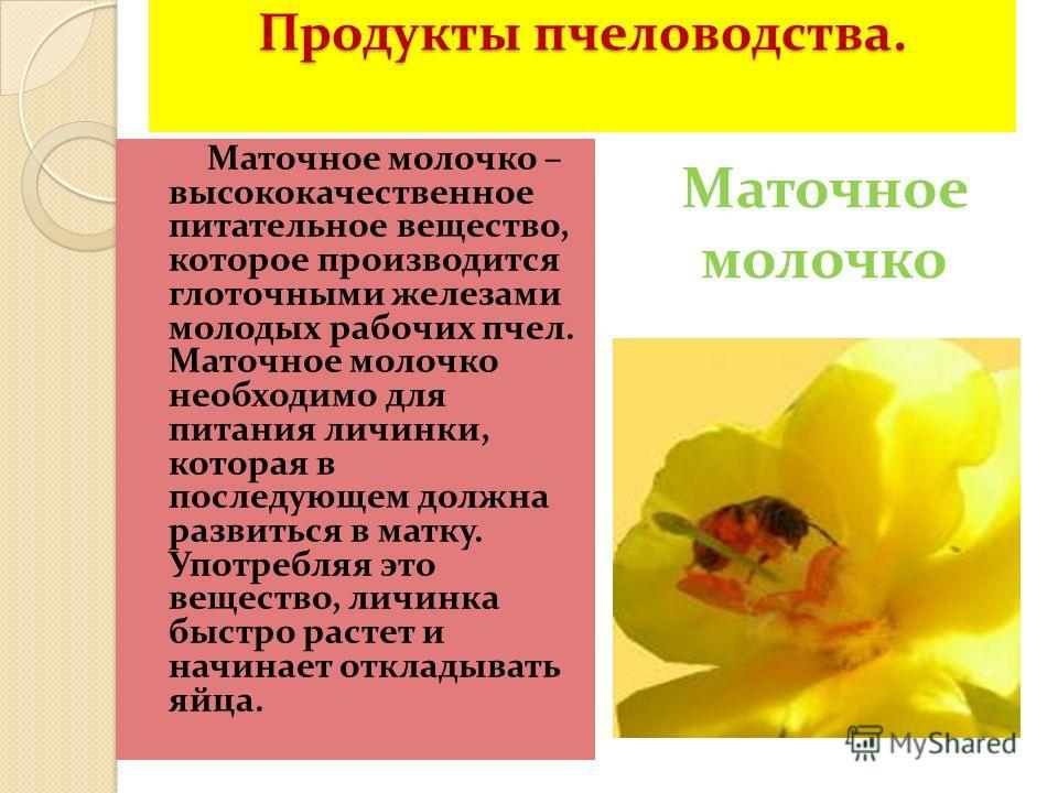 Продукты пчеловодства. Маточное молочко – высококачественное питательное вещество, которое производится глоточными железами молодых рабочих пчел. Маточное молочко необходимо для питания личинки, которая в последующем должна развиться в матку. Употреб