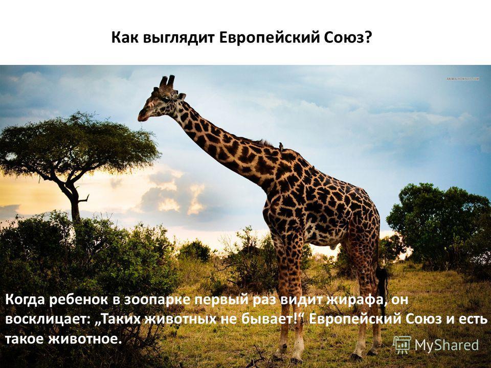 15 Как выглядит Европейский Союз? Когда ребенок в зоопарке первый раз видит жирафа, он восклицает: Таких животных не бывает! Европейский Союз и есть такое животное.
