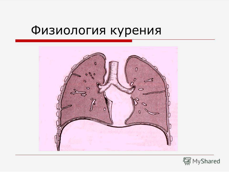 Физиология курения