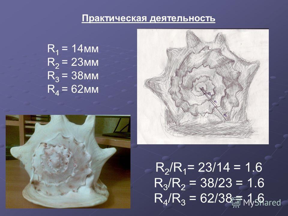 Практическая деятельность R 1 = 14 мм R 2 = 23 мм R 3 = 38 мм R 4 = 62 мм R 2 /R 1 = 23/14 = 1.6 R 3 /R 2 = 38/23 = 1.6 R 4 /R 3 = 62/38 = 1.6