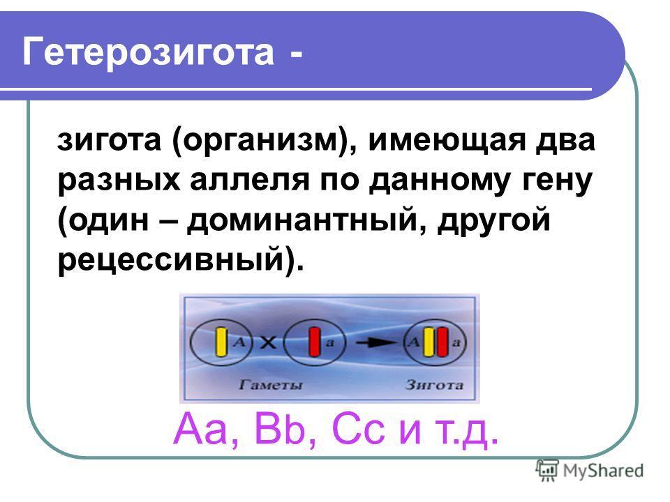 Гетерозигота - зигота (организм), имеющая два разных аллеля по данному гену (один – доминантный, другой рецессивный). Аа, В b, Сс и т.д.