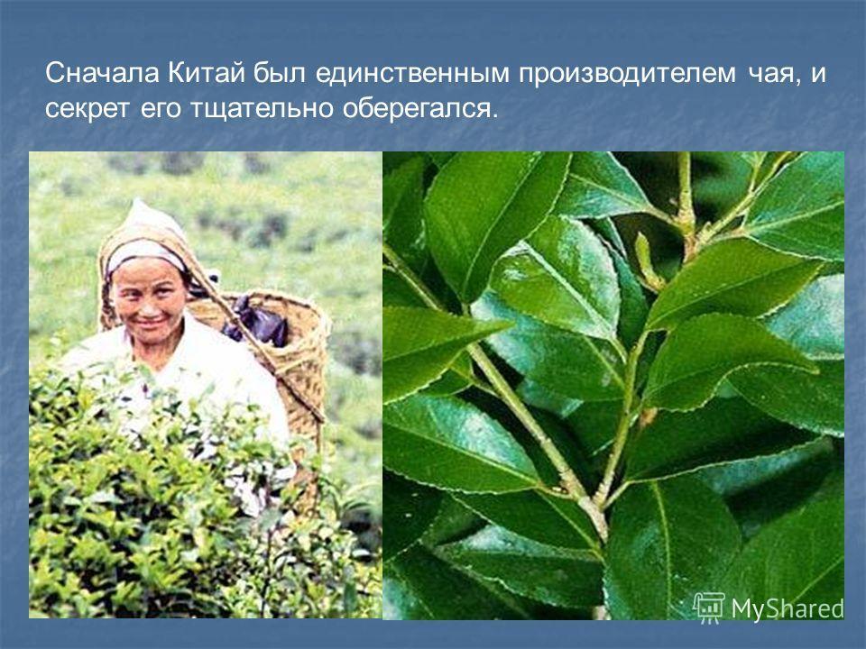 Сначала Китай был единственным производителем чая, и секрет его тщательно оберегался.