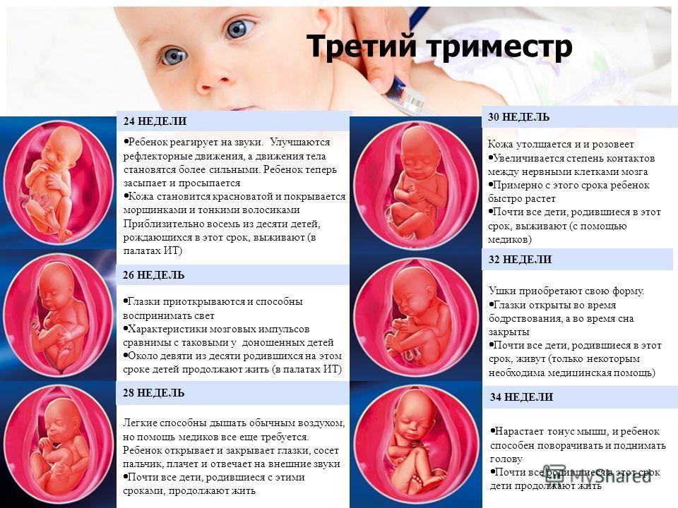 Что надо знать беременной в первом триместре 7
