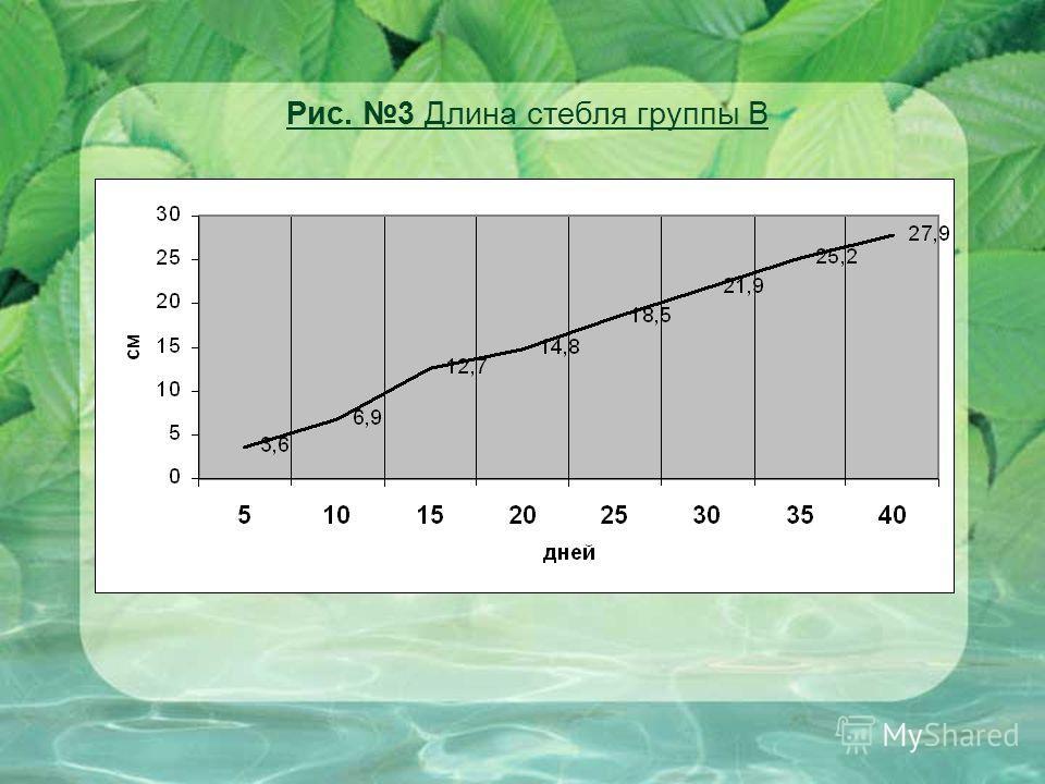 Рис. 3 Длина стебля группы В