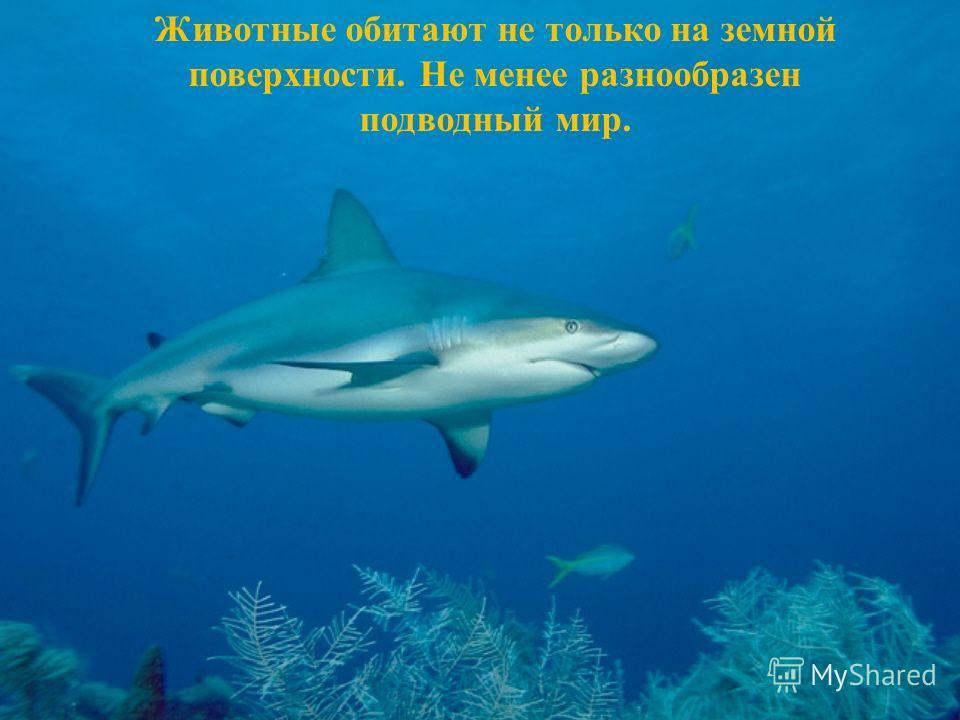 Животные обитают не только на земной поверхности. Не менее разнообразен подводный мир.