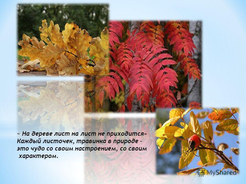 « На дереве лист на лист не приходится» Каждый листочек, травинка в природе – это чудо со своим настроением, со своим характером.