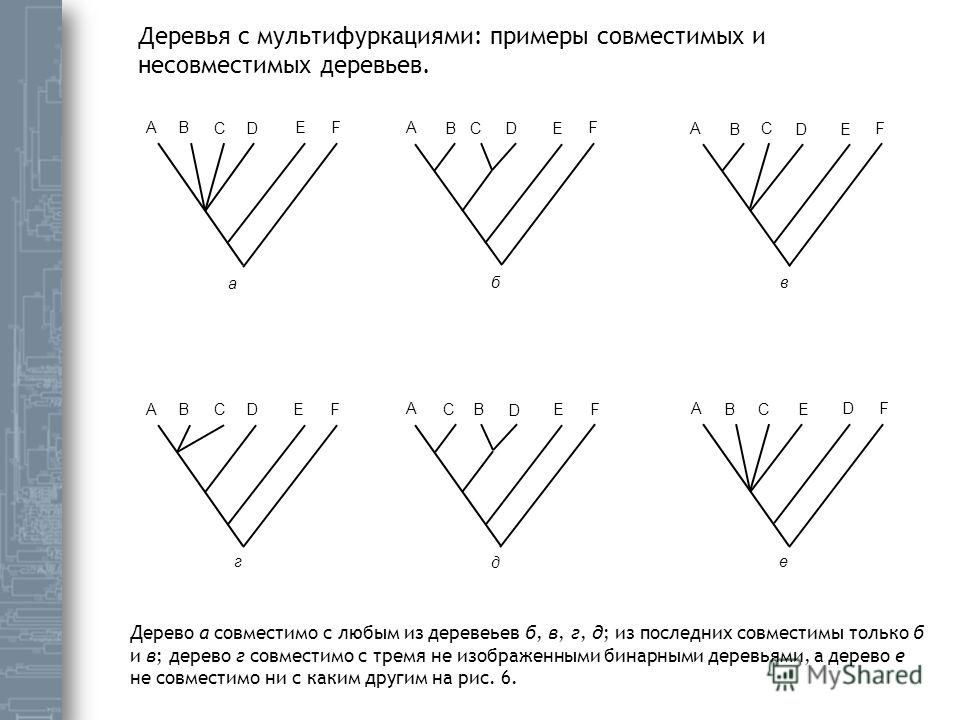 A A AA B B BB C C C C D D D D E E EE а бв г е д A B C D E F F F AB C D E F F F Деревья с мультифуркациями: примеры совместимых и несовместимых деревьев. Дерево а совместимо с любым из деревеьев б, в, г, д; из последних совместимы только б и в; дерево