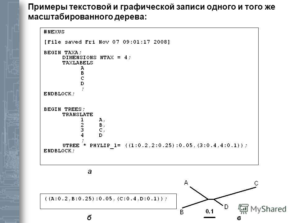Примеры текстовой и графической записи одного и того же масштабированного дерева: