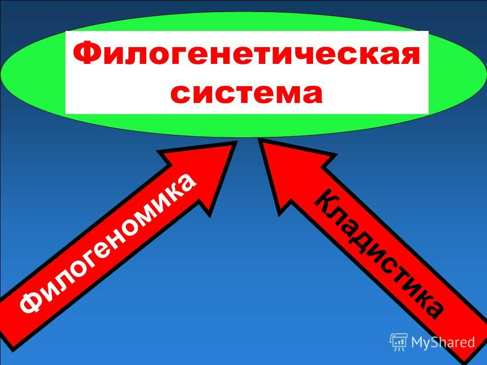 Филогеномика Филогенетическая система Кладистика