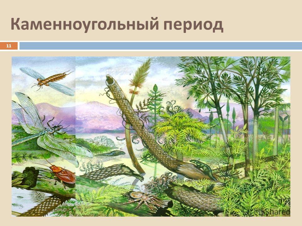 Каменноугольный период 11