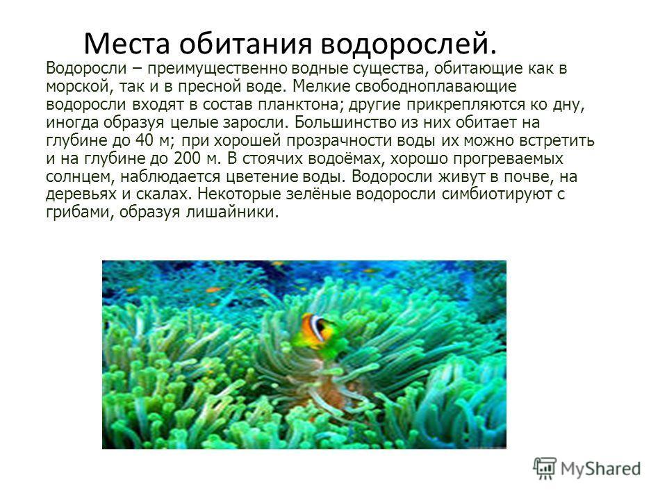 Водоросли – преимущественно водные существа, обитающие как в морской, так и в пресной воде. Мелкие свободноплавающие водоросли входят в состав планктона; другие прикрепляются ко дну, иногда образуя целые заросли. Большинство из них обитает на глубине