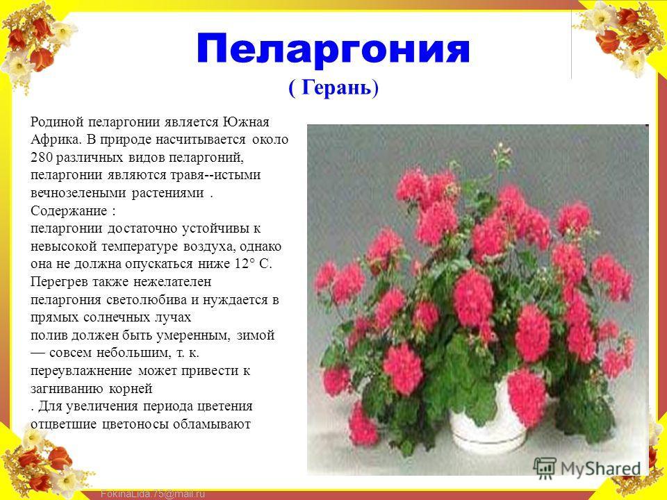FokinaLida.75@mail.ru Пеларгония ( Герань) Родиной пеларгонии является Южная Африка. В природе насчитывается около 280 различных видов пеларгоний, пеларгонии являются травя--истыми вечнозелеными растениями. Содержание : пеларгонии достаточно устойчив