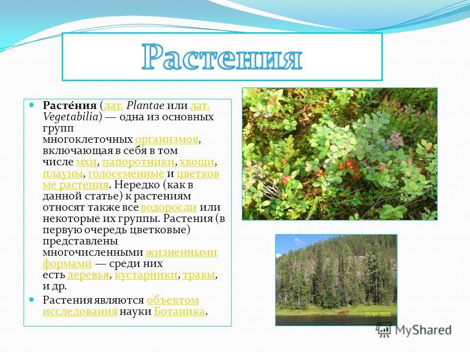 Расте́ния (лат. Plantae или лат. Vegetabilia) одна из основных групп многоклеточных организмов, включающая в себя в том числе мхи, папоротники, хвощи, плауны, голосеменные и цветковые растения. Нередко (как в данной статье) к растениям относят также