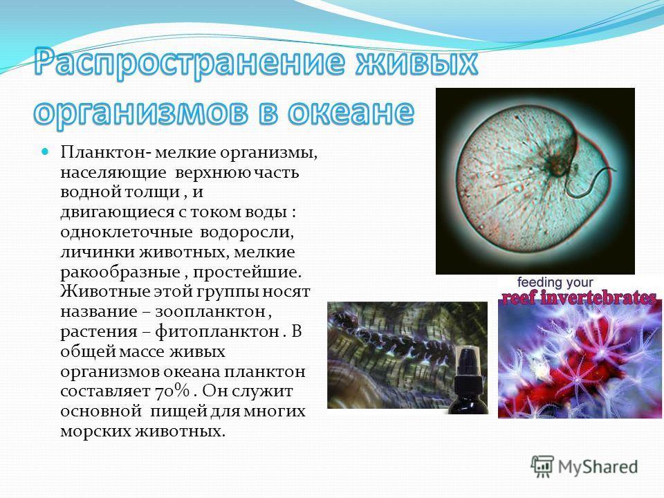 Планктон- мелкие организмы, населяющие верхнюю часть водной толщи, и двигающиеся с током воды : одноклеточные водоросли, личинки животных, мелкие ракообразные, простейшие. Животные этой группы носят название – зоопланктон, растения – фитопланктон. В