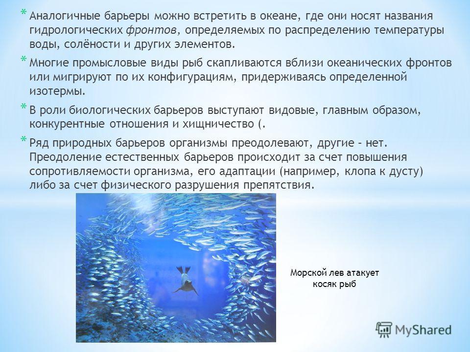 * Аналогичные барьеры можно встретить в океане, где они носят названия гидрологических фронтов, определяемых по распределению температуры воды, солёности и других элементов. * Многие промысловые виды рыб скапливаются вблизи океанических фронтов или