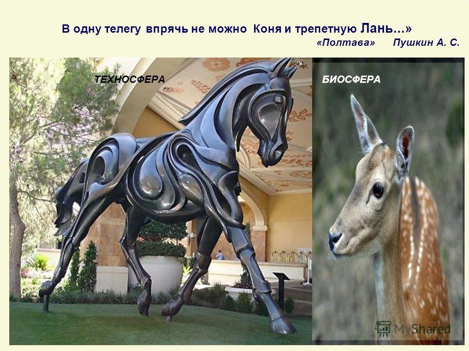 В одну телегу впрячь не можно Коня и трепетную Лань...» «Полтава» Пушкин А. С. ТЕХНОСФЕРА БИОСФЕРА