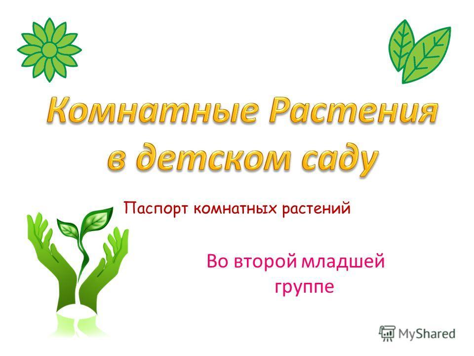 Паспорт комнатных растений Во второй младшей группе