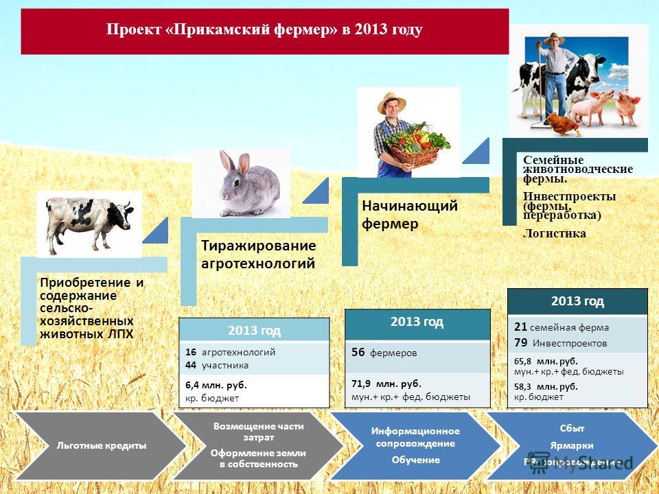 Проект «Прикамский фермер» в 2013 году Семейные животноводческие фермы. Инвестпроекты (фермы, переработка) Логистика 11 2013 год 16 агротехнологий 44 участника 6,4 млн. руб. кр. бюджет 2013 год 56 фермеров 71,9 млн. руб. мун.+ кр.+ фет. бюджеты 2013