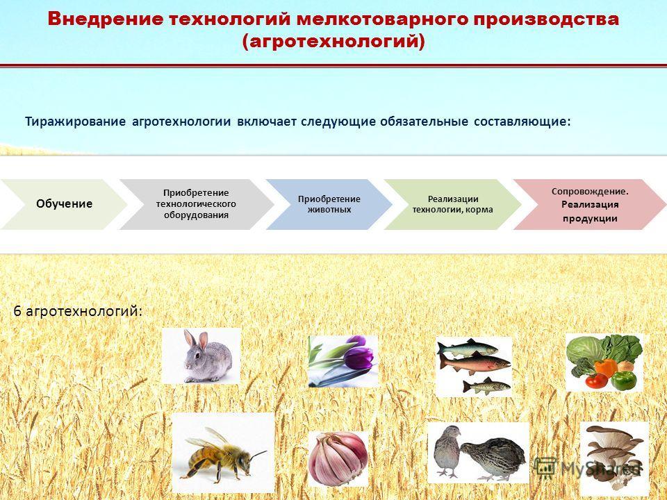Тиражирование агротехнологии включает следующие обязательные составляющие: 6 агротехнологий: Внедрение технологий мелкотоварного производства (агротехнологий)