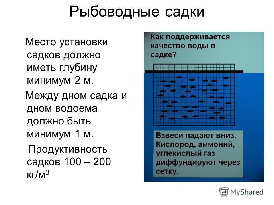 Место установки садков должно иметь глубину минимум 2 м. Между дном садка и дном водоема должно быть минимум 1 м. Продуктивность садков 100 – 200 кг/м 3 Рыбоводные садки